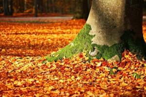 秋季养生先养心如何在秋季进行养生